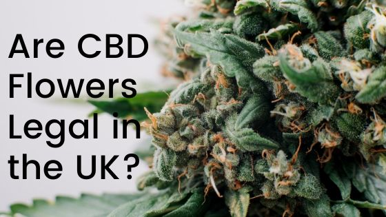 Is it Legal to Buy CBD Flowers in the UK?