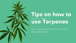 How to Incorporate Terpenes into Your Daily CBD Routine