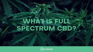 What Does Full Spectrum CBD Mean?
