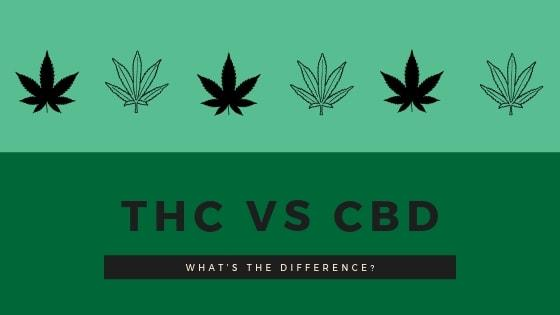 THC vs CBD... What's the Difference?