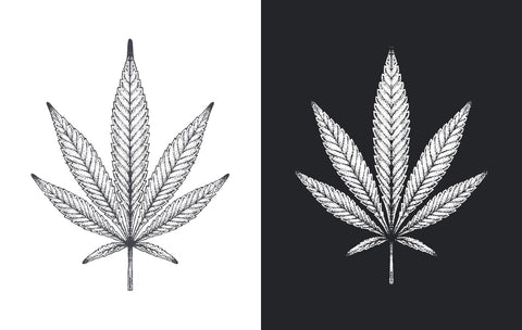 Black and White Cannabis
