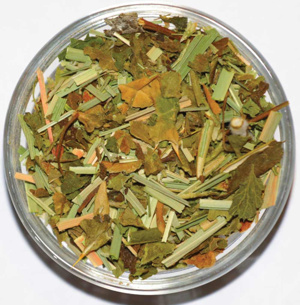 Refreshing Olive Leaf-Lemonbalm | Galil Blend - ShalvaTea Kosher Israeli Herbal Teas