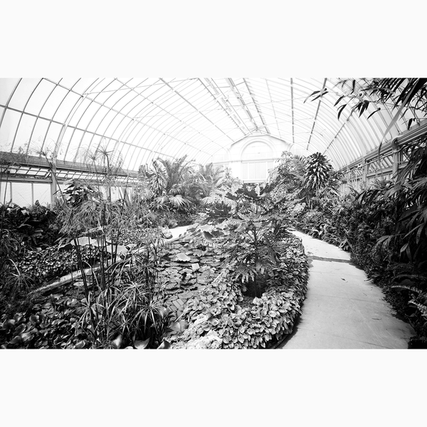 Belle Isle Conservatory <br> Vintage Detroit - The Detroit Wallpaper Co.