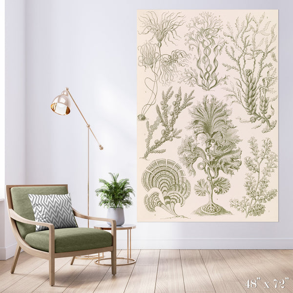 Algae Study Colossal Art Print - Trendy Custom Wallpaper | Contemporary Wallpaper Designs | The Detroit Wallpaper Co.