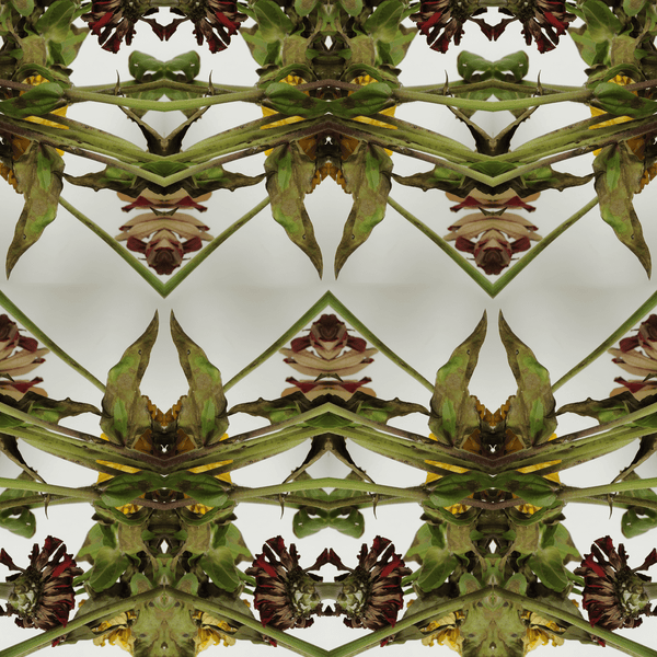 Botanikis - Trendy Custom Wallpaper | Contemporary Wallpaper Designs | The Detroit Wallpaper Co.