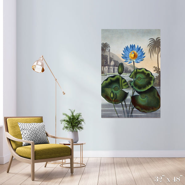Egyptian Waterlily Colossal Art Print - Trendy Custom Wallpaper | Contemporary Wallpaper Designs | The Detroit Wallpaper Co.