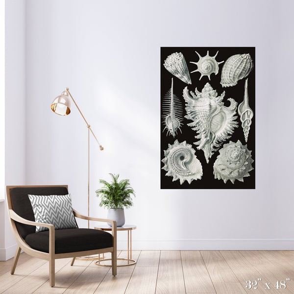 Snail Shells Colossal Art Print - Trendy Custom Wallpaper | Contemporary Wallpaper Designs | The Detroit Wallpaper Co.