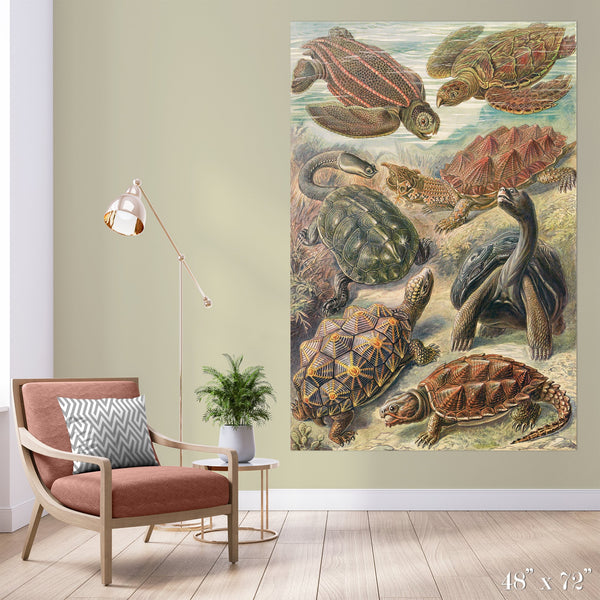 Tortoise Study Colossal Art Print - Trendy Custom Wallpaper | Contemporary Wallpaper Designs | The Detroit Wallpaper Co.