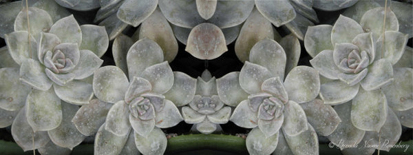 Grey Succulents - Trendy Custom Wallpaper | Contemporary Wallpaper Designs | The Detroit Wallpaper Co.