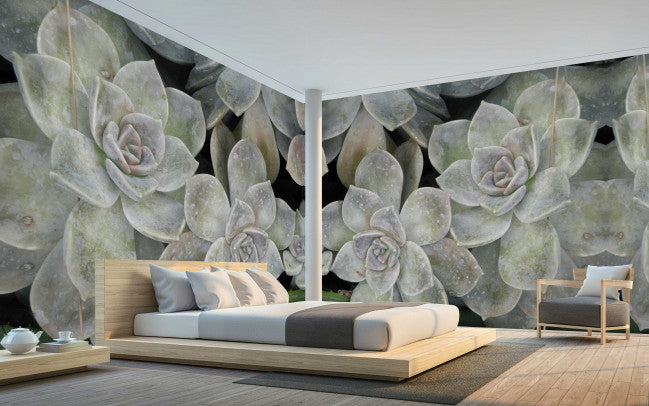 Grey Succulents <br> Brenda Rosenberg - Trendy Custom Wallpaper | Contemporary Wallpaper Designs | The Detroit Wallpaper Co.