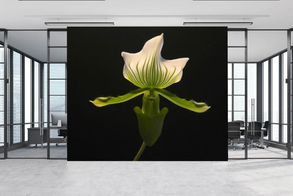 Welcome Orchid <br> Brenda Rosenberg - Trendy Custom Wallpaper | Contemporary Wallpaper Designs | The Detroit Wallpaper Co.
