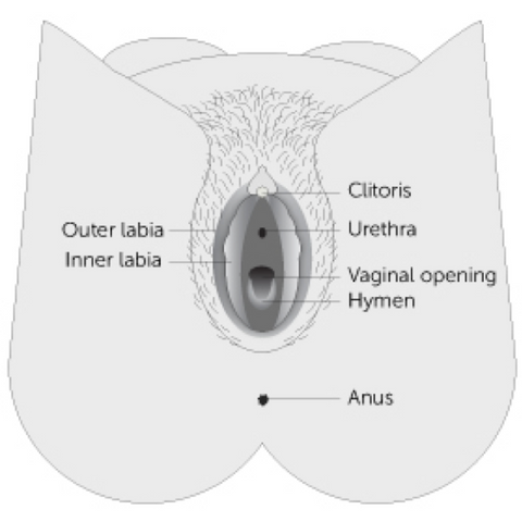 A woman putting a tampon into her vagina