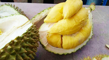 Optimizing The Remarkable Benefits Of Durian Fruit