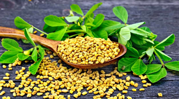 Contributions of Fenugreek Seeds to Health