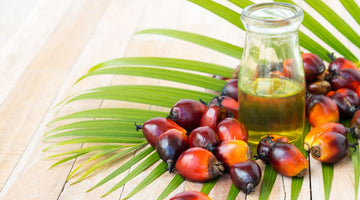 Optimizing The Benefits Of Palmitic Acid