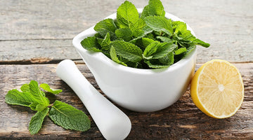 Using Lemon Balm At Home And For Health