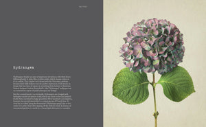 ANTHOLOGY OF FLOWERS  by Jane Field-Lewis and Richard Maxted