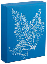 SUNPRINT NOTECARDS: THE CYANOTYPES OF ANNA ATKINS