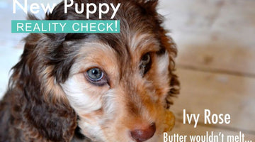 New puppy – reality check!
