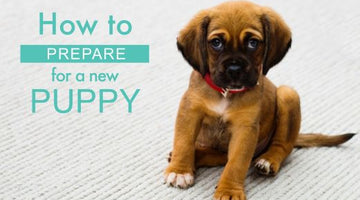 How to prepare for a new puppy!