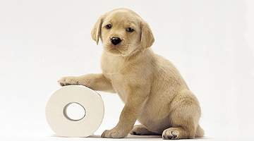 Toilet training your new puppy!