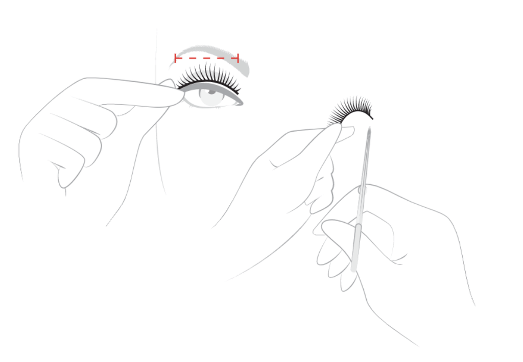 Apply the mink eyelashes to the bottom of your own lash line and subtract the extra part.