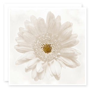 Floral Card - Shabby White Daisy Print by Susan Case