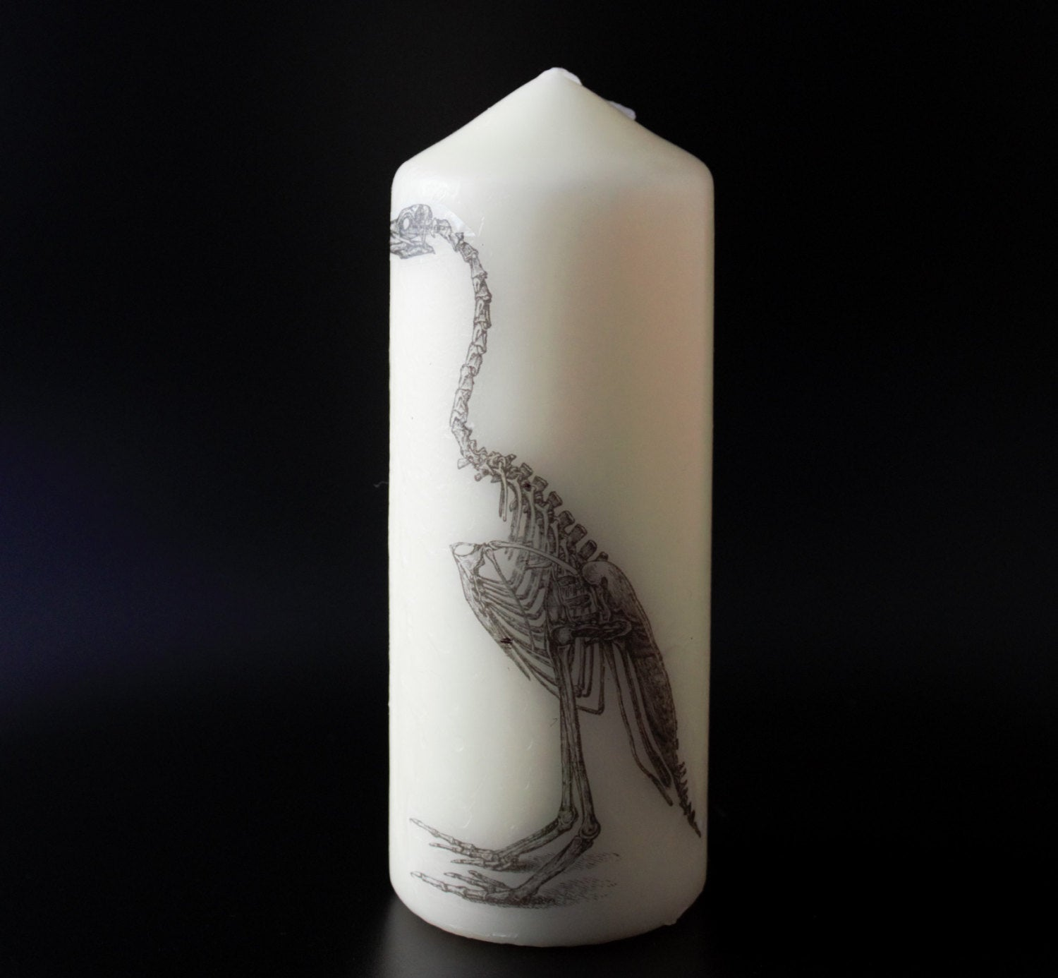 Anatomical Bird Skeleton  - Pillar Candle - Anatomical Decor - ByCandlelight27