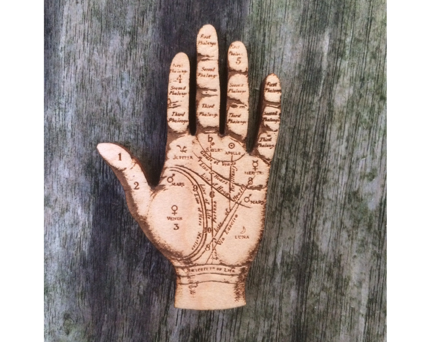 Palmistry Hand - Anatomical Jewellery - Wooden Brooch - ByCandlelight27