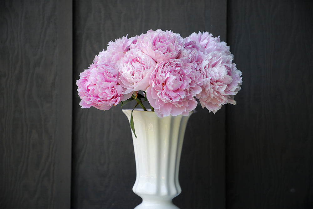 Coming Soon: Locally Grown Peonies