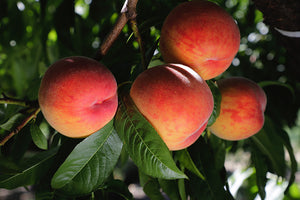 Hood River Peach Sampler