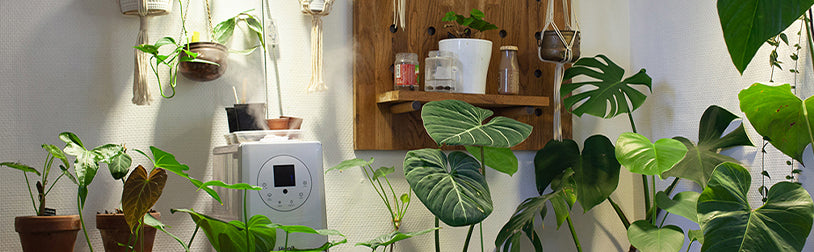 Blog-Humidificateur-Air-Plantes-Airissime