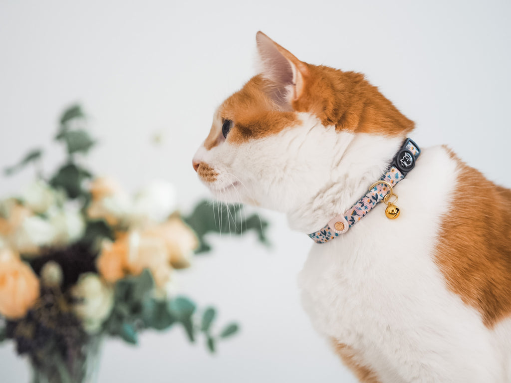 Cat Collar - Scandi Spring