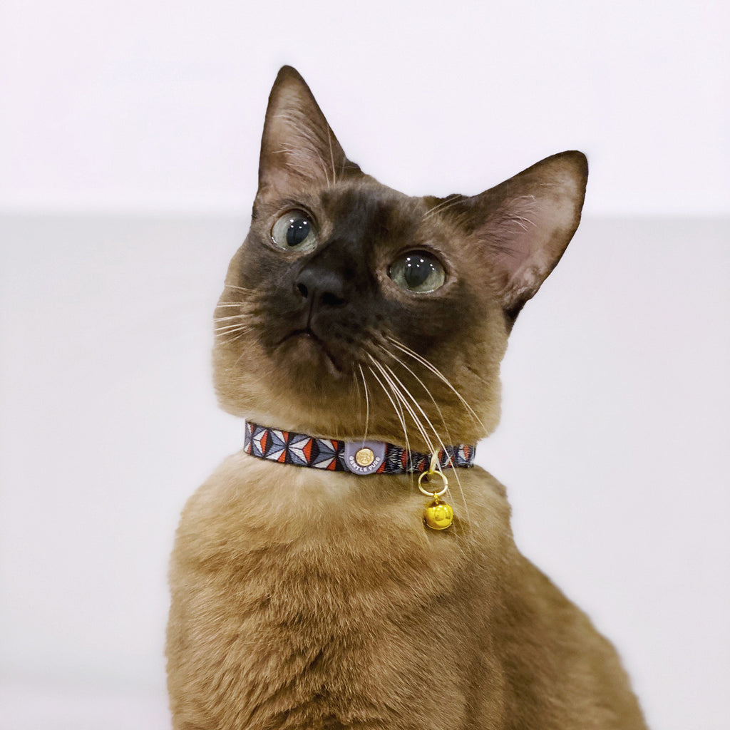 Cat Collar - Dashing Diamond