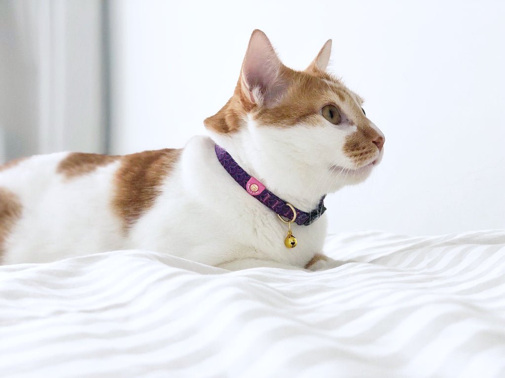 Cat Collar - Piper Pink