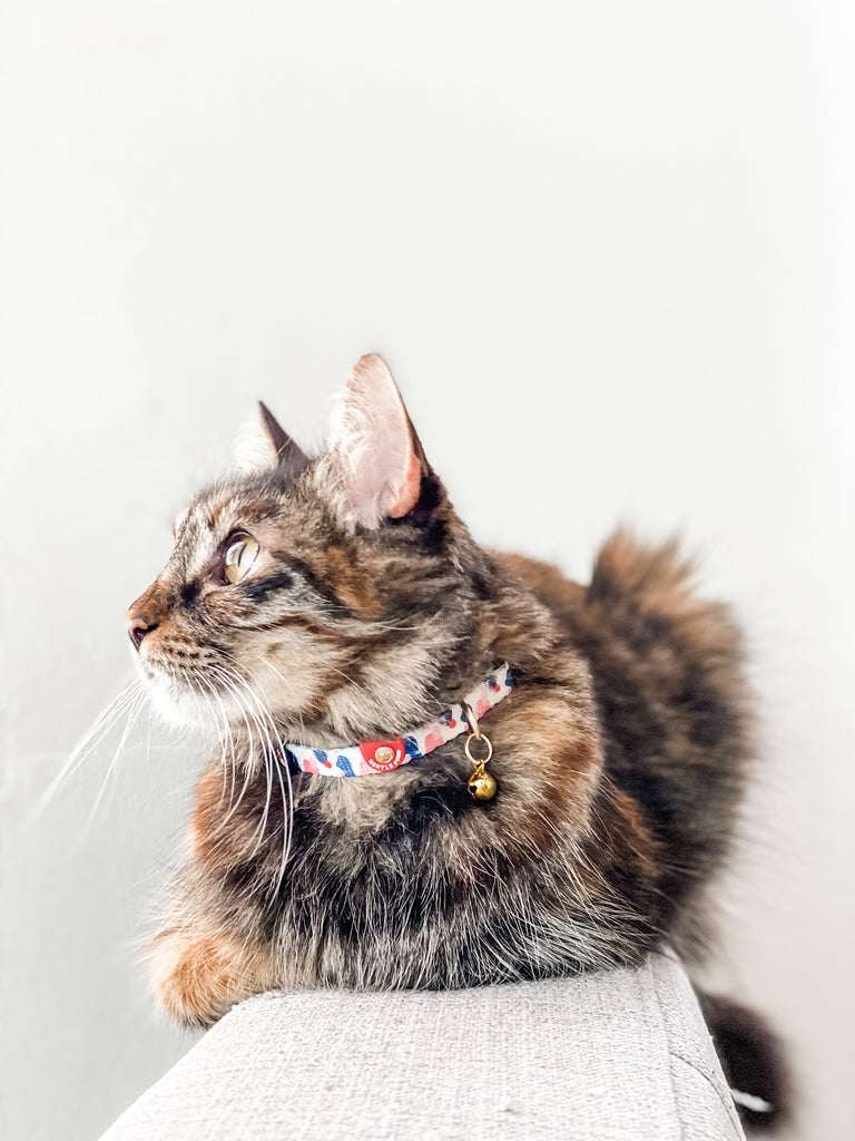 Cat Collar - Lovely Leia