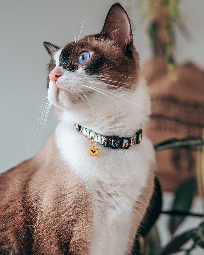 Cat Collar - Aloha Alice