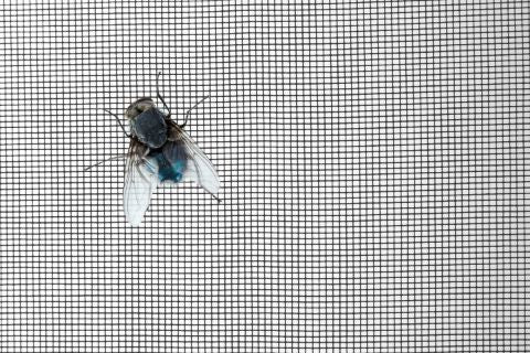 House fly on screen