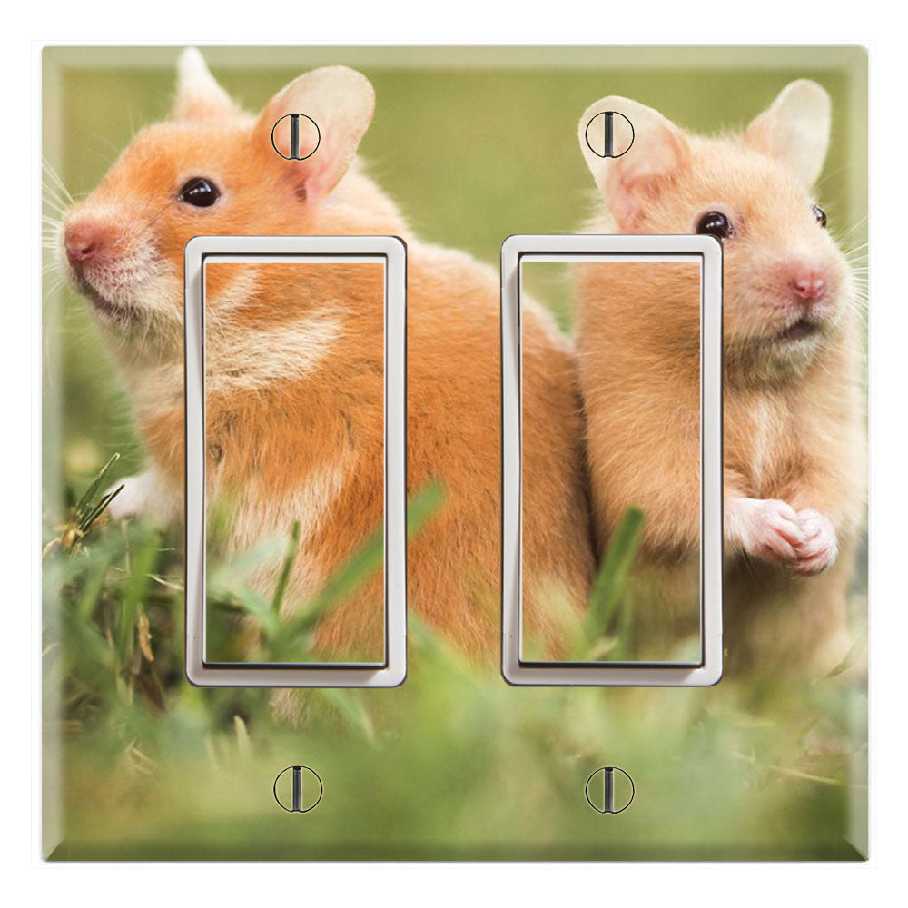 Couple Hamsters Lovely Cute