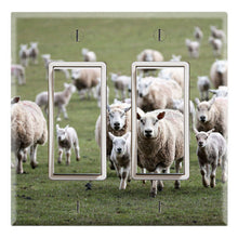 Load image into Gallery viewer, Animal Farm Merino Sheep Herd