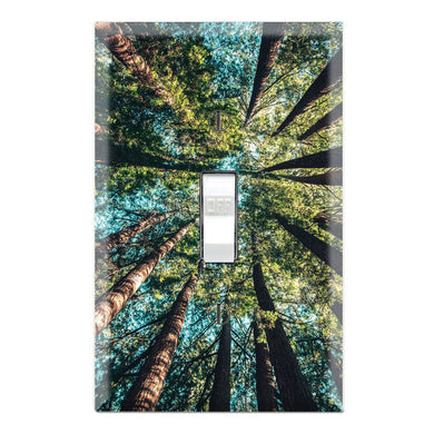 Forest Trees Nature View Wallpaper Print