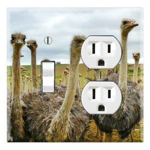 Ostriches Family