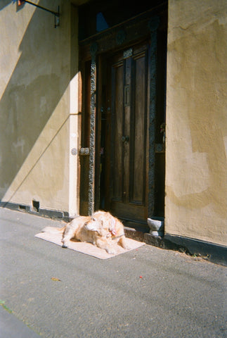 An old golden retriever dog lays down by a door on a quiet, sunny street