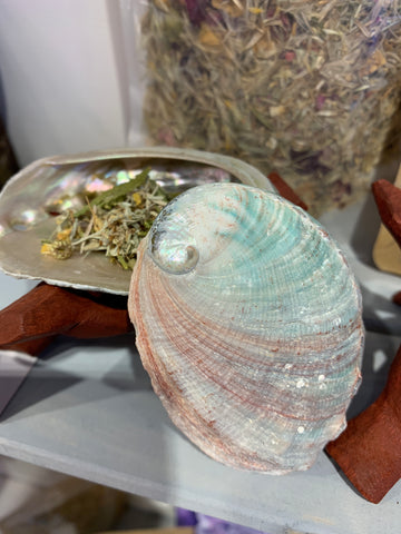 "Abalone Shell for Smudging 3 sizes (3-4"" / 4-5""/ 5-6"")"