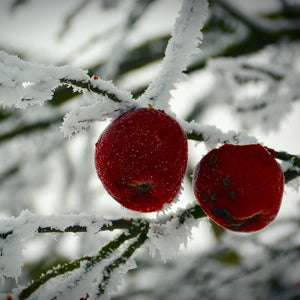 Winter Candy Apple Products & Bundle