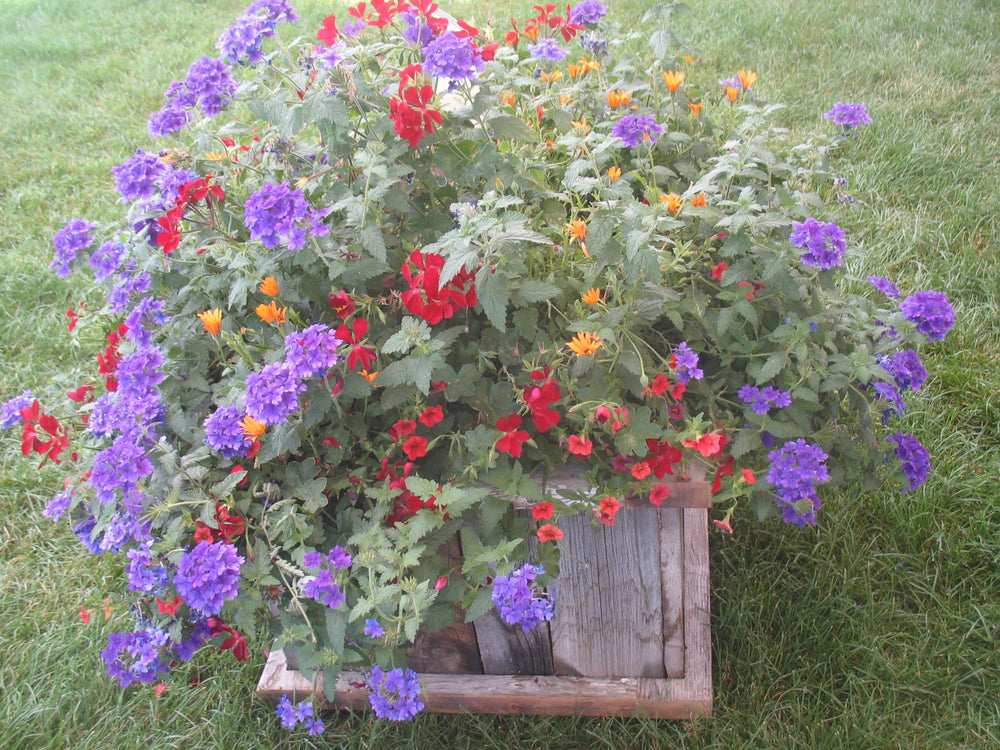 The Grand - Barn Wood  Planter Box