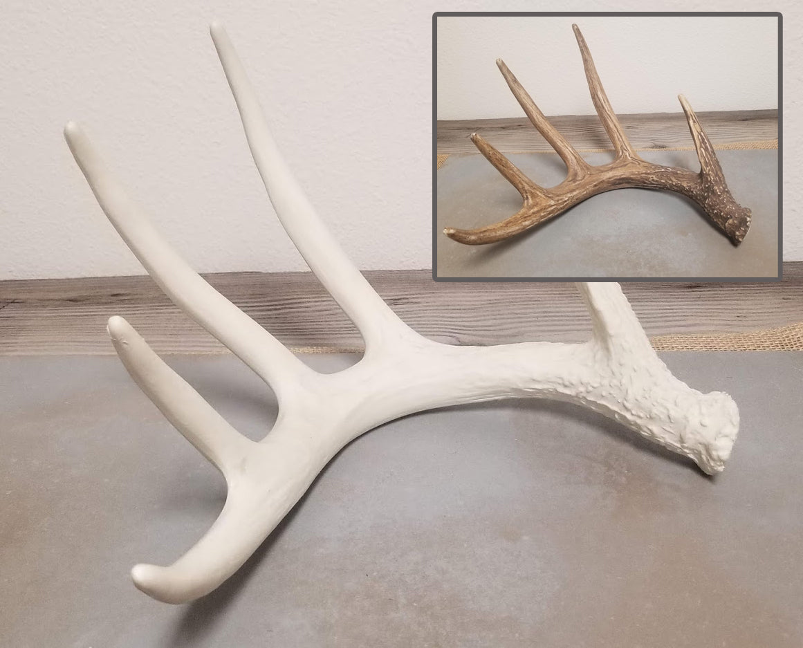 Cast Antlers in Natural or White