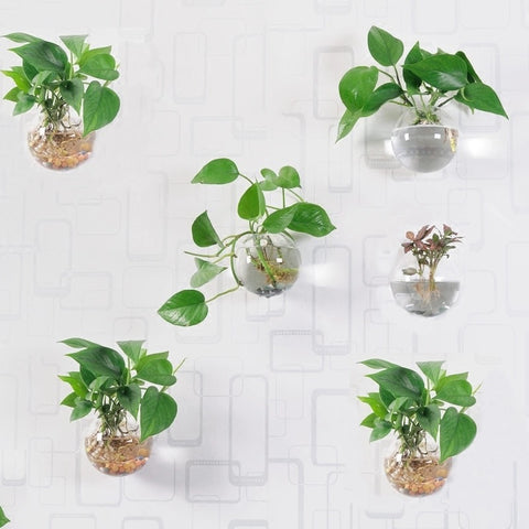 6-Pc Set of Wall Hanging Glass Ball Planters