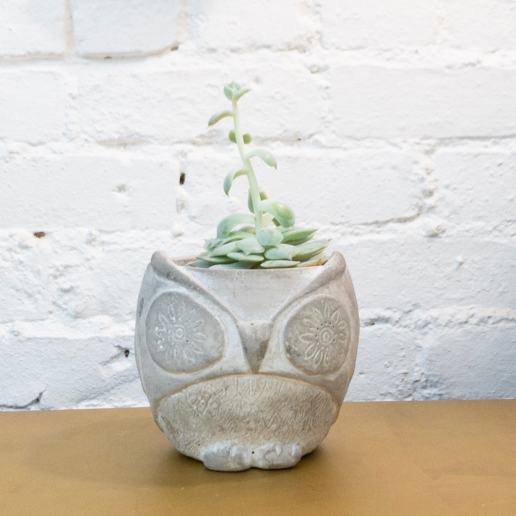 Cement Owl Table Top Pot