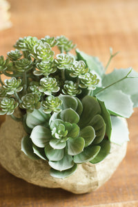 Assorted Succulent Garden in a paper pot